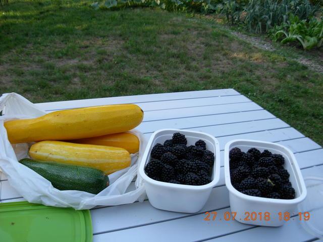 garden, 2018, results (7).JPG